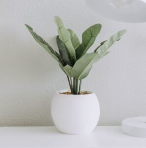 Indoor Cache Pots (No Hole or Plug Included)