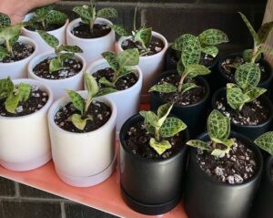 Indoor Pots with Drainage