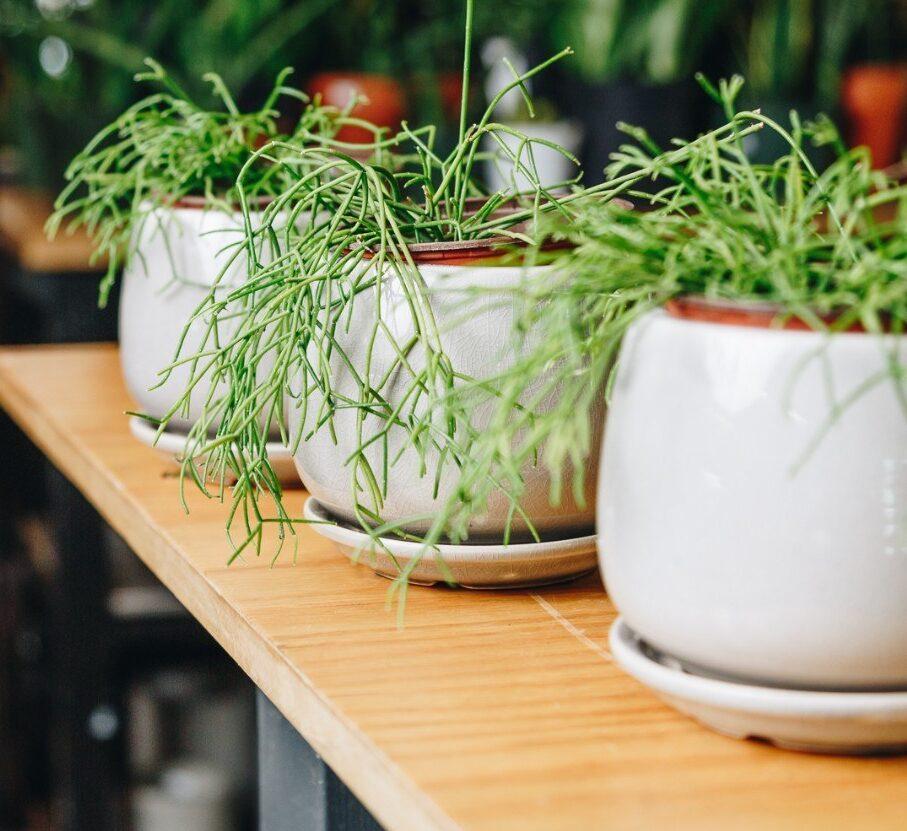 Guemes Planter